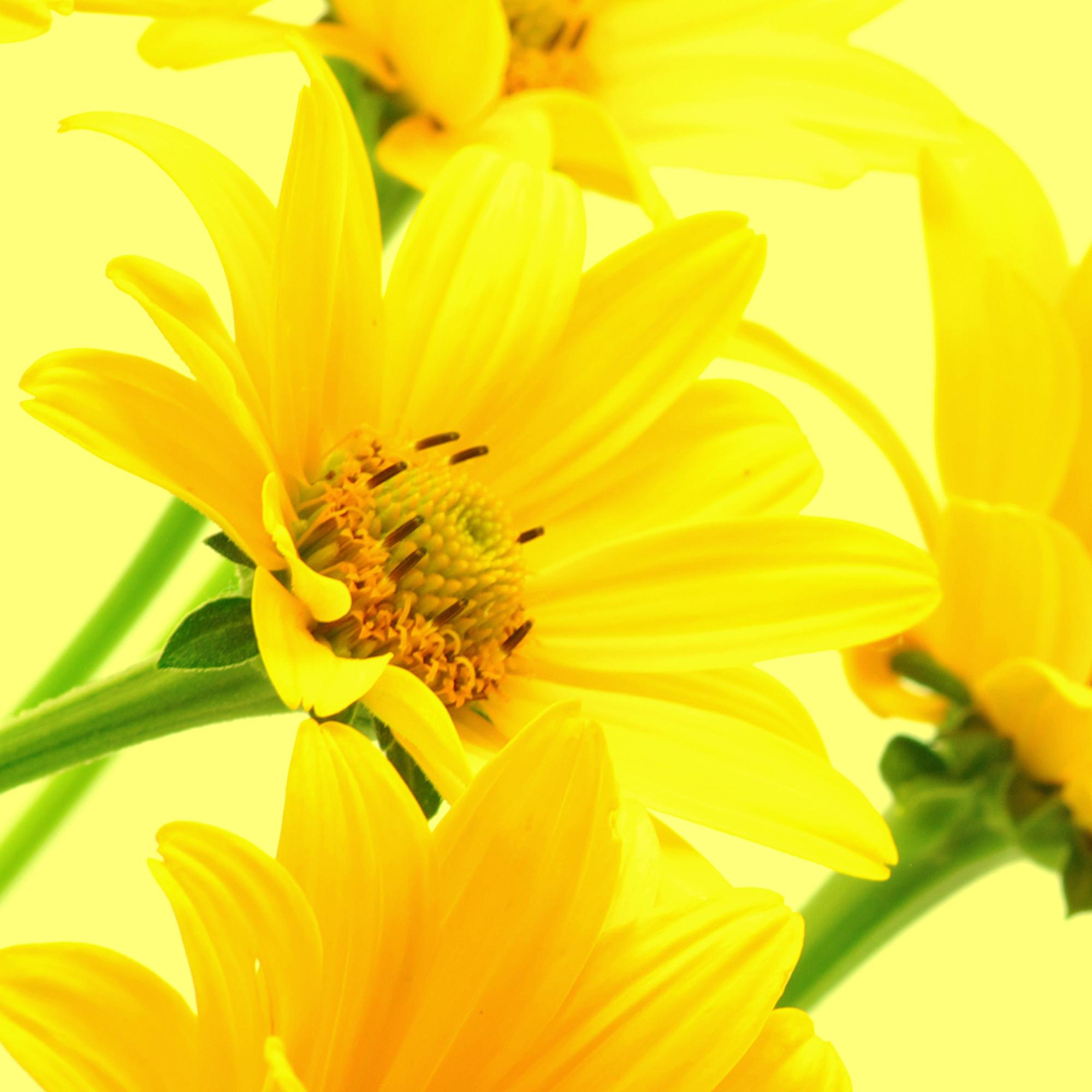 Салфетки бумажные Gratias Желтые герберы, трехслойные, 20 шт4Трехслойные бумажные салфетки Gratias Желтые герберы, выполненные из натуральной целлюлозы с изображением желтых гербер, станут отличным дополнением любого праздничного стола. Они отличаются необычной мягкостью, прочностью и оригинальностью. Состав: 100% целлюлоза. Размер салфетки: 33 см х 33 см. Количество слоев: 3. Количество салфеток: 20 шт.
