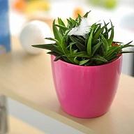 DUO190, цвет:-B GREEN APPLE Кашпо круглое с автополивом, диаметр 190, цвет: бежDUO190-BКашпо имеет уникальную систему автополива, благодаря которой корневая система растения непрерывно снабжается влагой из резервуара. Уровень воды в резервуаре контролируется с помощью специального индикатора. В зависимости от размера кашпо и растения воды хватает на 2-12 недель. 20,0х19,5х19,0