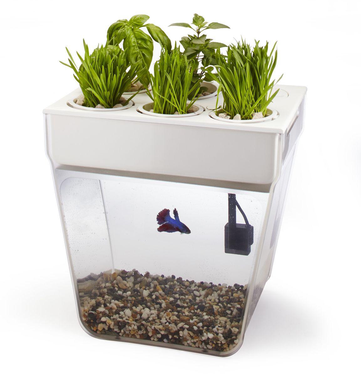 Игровой набор Аква-ферма31001Акваферма представляет собой замкнутую экосистему, поддерживающую баланс между растениями и рыбкой. Эдакий самоочищающийся аквариум, который выращивает урожай. Это действительно мини-ферма, благодаря которой любой городской житель может обеспечивать себя свежей зеленью к столу. Вы выращиваете свой собственный урожай и одновременно наблюдаете за жизнью рыбки, а все заботы о чистоте ее аквариума берут на себя растения. Система регулирует сама себя. Акваферма производится в США. В набор Аквафермы входит все необходимое для создания полноценной эко-фермы. Просто добавьте рыбку!