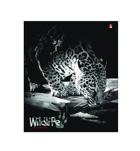 Набор тетрадей Дикие кошки, 48 листов, формат А5, 5 шт7-48-1007Серия тетрадей Дикие кошки посвящена самым опасным и красивым хищникам из мира дикой природы. Для двойных обложек подобран качественный картон. Сплошное покрытие гибридным лаком создает эффект матовой рельефной поверхности, похожей на пластик. Графическая информация выделена серебряной фольгой. На внутреннем развороте изображена бескрайняя африканская саванна на закате. Блоки состоят из 48 листов первосортной белой бумаги. Листы не просвечивают чернила. На листах, разлинованных в клетку, отмечены поля.