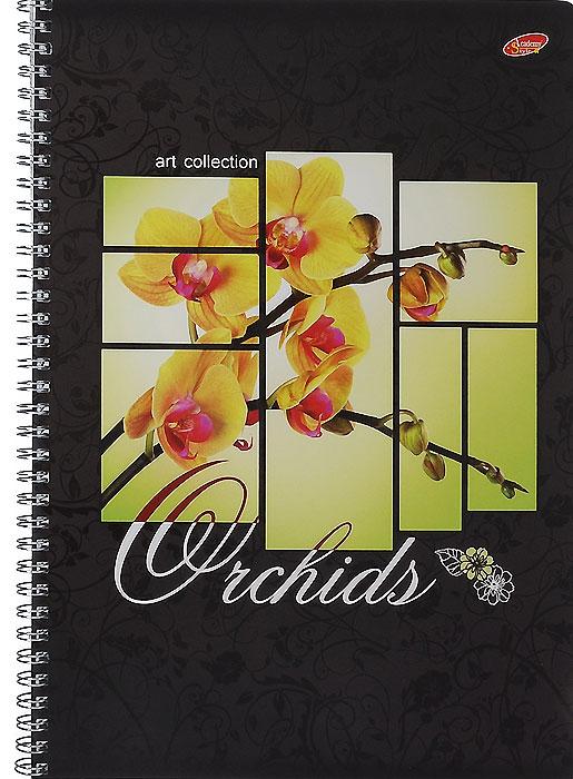 Тетрадь Цветы Орхидеи, 80 листов, формат А4, цвет: черный, желтый7170/2_Цветы ОрхидеиУниверсальная тетрадь Цветы Орхидеи подойдет как для учебы, так и для работы. Обложка тетради выполнена из мелованного картона с глянцевым изображением цветов орхидеи. Внутренний блок состоит из 80 листов белой офсетной бумаги на гребне со стандартной линовкой в клетку без полей.