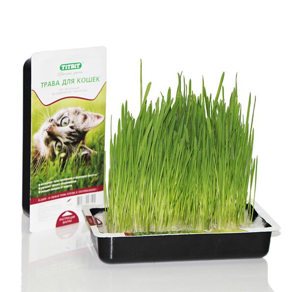 Трава для кошек Titbit, в лотке3145100% натуральный продукт, без использования искусственных субстратов. Технологичный дренажный мешок обеспечивает дренаж, а также способствует созданию тепличного эффекта для более эффективного роста семян. Свежепророщенная трава восполняет запас витаминов и фолиевой кислоты, улучшает процесс пищеварения и очищает желудок животного от шерсти. Удобство использования - после прорастания семян, в лотке не нужно делать дренажные отверстия и подставлять поддон, а в случае опрокидывания лотка синтепоновый мешок предотвращает рассыпание семян. Состав: Овес, дренажный мешок из синтепона.