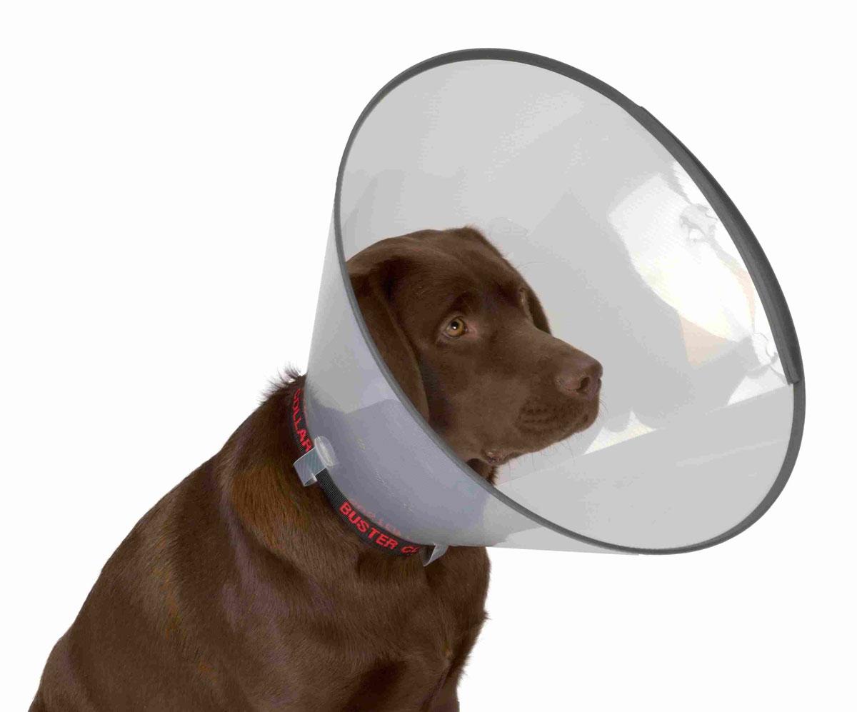 Защитный воротник для животных Kruuse Buster, высота 15 см. 273903273903Защитный воротник Kruuse Buster изготовлен из высококачественного нетоксичного пластика, который позволяет сохранять углы обзора для животного. Изделие, оснащенное защитным резиновым ободком, разработано для ограничения доступа собаки к заживающей ране или послеоперационному шву. Простота в эксплуатации позволяет хозяевам самостоятельно одевать и снимать защитный воротник с собаки. Подходит для собак средних и мелких пород. Обхват шеи: 20-24 см. Высота воротника: 15 см.