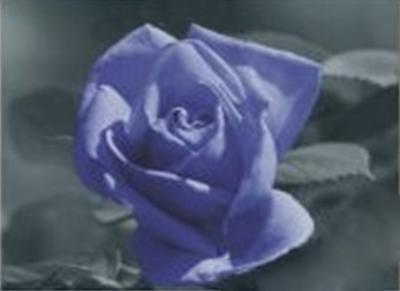 Набор для изготовления картины со стразами Cristal Роза, 50 см х 50 см7707864Набор для изготовления картины со стразами Cristal Роза поможет вам создать свой личный шедевр. Работа, выполненная своими руками, станет отличным подарком для друзей и близких! В набор входит: - полотно-схема с условными обозначениями и клеевым слоем; - пластиковое блюдце; - стразы (35 цветов); - карандаш; - пинцет.