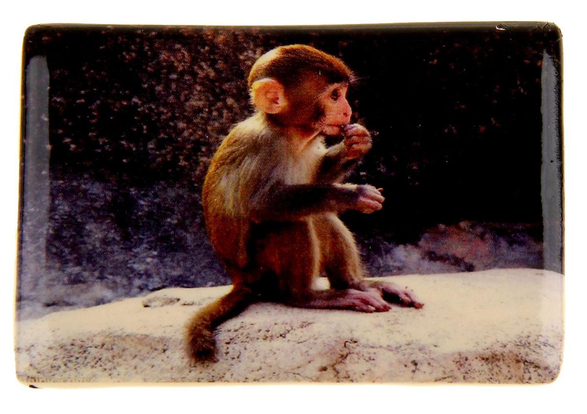 Магнит Sima-land Малыш обезьянки, 7,5 см х 5 см1057296Магнит Sima-land Малыш обезьянки, изготовленный из керамики, оформлен изображением забавного детеныша обезьяны. Изделие поможет вам украсить не только холодильник, но и любую другую магнитную поверхность. Такой магнит пополнит коллекцию уже существующих сувениров или станет началом новой коллекции. Он надолго сохранит память о замечательном дне и о том, кто вручил подарок. Материал: керамика, агломерированный феррит.