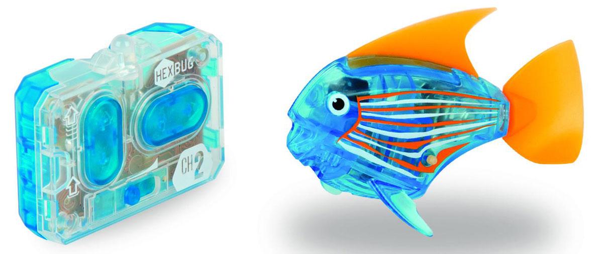Hexbug Микро-робот на радиоуправлении Рыба-ангел цвет синий460-4086Hexbug Aquabot 3.0 RC - это обновленная версия роборыбки, управляемая при помощи пульта ДУ. Кроме того, управляемая рыбка-ангел получила яркий и привлекательный окрас плавничков и хвостика, стильный декор и умные, словно настоящие, глазки. Наделив рыбку пультом ДУ, разработчики не лишили ее самостоятельности. Если вы не хотите управлять рыбкой, то просто пустите робо-рыбку в аквариум и она будет плавать сама. Не утратила прирученная рыбка и первоначальных свойств: как и раньше аквабот просыпается от стука по стенкам аквариума и светится в темноте.