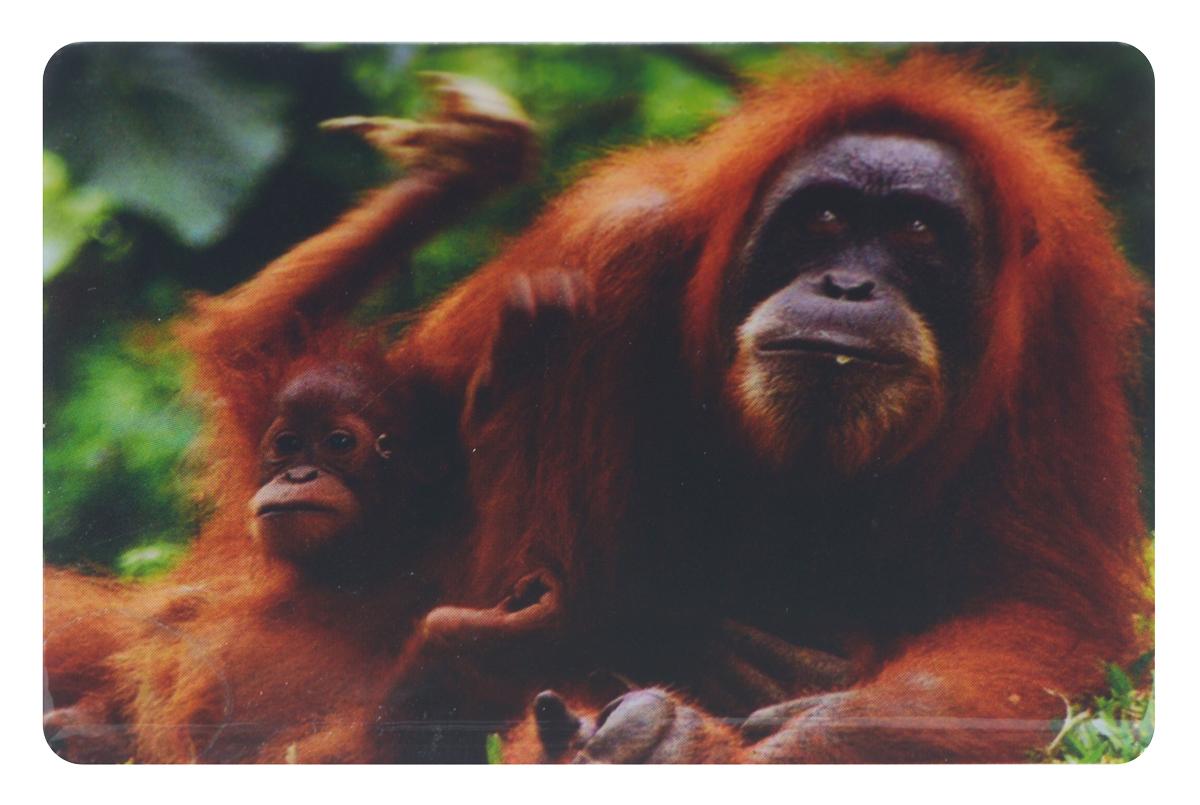 Магнит Sima-land Добрые глаза обезьянки, 7,5 см x 5 см1057292Магнит Sima-land Добрые глаза обезьянки, выполненный из керамики и агломерированного феррита, станет приятным штрихом в повседневной жизни. Оригинальный магнит, декорированный изображением обезьян, поможет вам украсить не только холодильник, но и любую другую магнитную поверхность. Такой магнит пополнит коллекцию уже существующих сувениров или станет началом новой коллекции. Он надолго сохранит память о замечательном дне и о том, кто вручил подарок. Материал: керамика, агломерированный феррит.