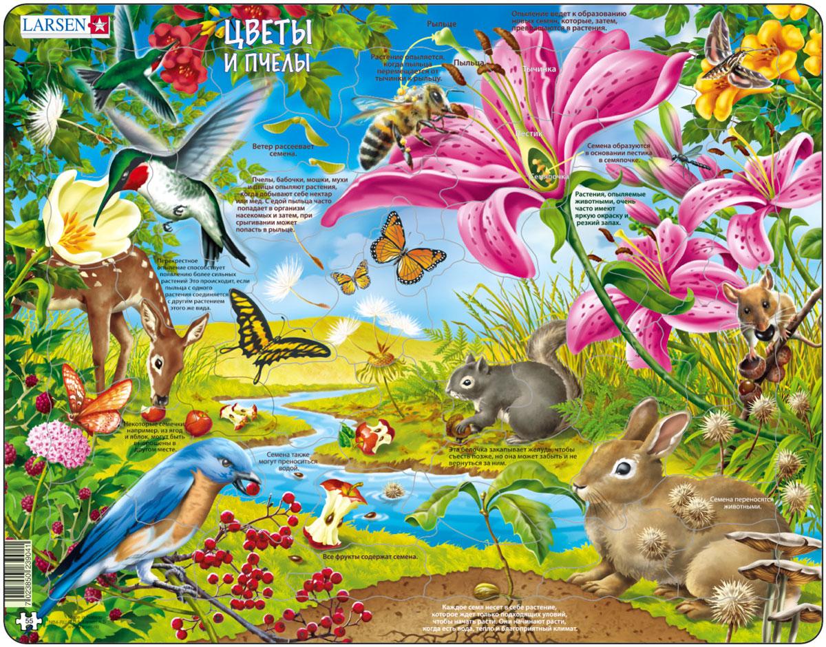 Larsen Пазл Цветы и пчелыNB4Пазлы Ларсен направлены, прежде всего, на обучение. Пазл Larsen Цветы и пчелы в игровой форме познакомит малыша с таким интересным природным явлением, как опыление цветов. На яркой картинке наглядно показано, как происходит рост цветка, как появляется семечко, как цветок опыляют насекомые, как ветер разносит семена, и как они снова попадают в землю. Выполненные из высококачественного трехслойного картона, пазлы не деформируются и легко берутся в руки. Все пазлы снабжены специальной подложкой, благодаря чему их удобно собирать. Размер готового пазла: 36,5 см х 28,5 см.