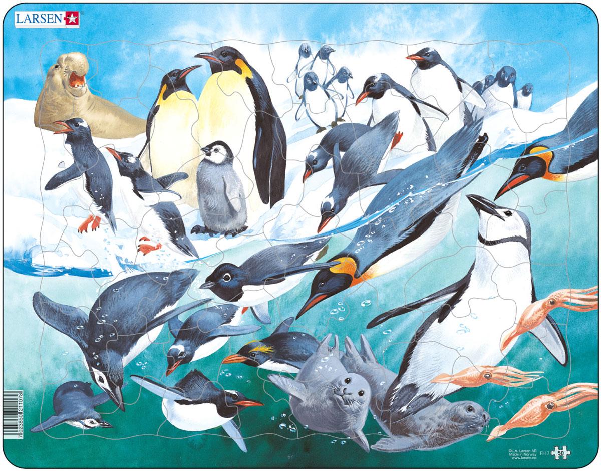 Larsen Пазл ПингвиныFH7Пазлы Ларсен направлены, прежде всего, на обучение. Пазл Larsen Пингвины изображает пингвинов, а также других обитателей заснеженных материков и холодных морей. Разнообразные животные будут радовать малыша, когда он соберет вместе все детали. Выполненные из высококачественного трехслойного картона, пазлы не деформируются и легко берутся в руки. Все пазлы снабжены специальной подложкой, благодаря чему их удобно собирать. Размер готового пазла: 36,5 см х 28,5 см.