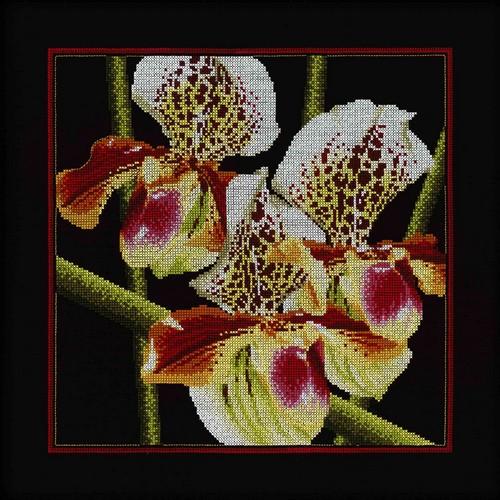 Набор для вышивания крестом RTO Орхидеи Пафиопедилум, 36 х 36 смM263Красивый рисунок-вышивка, выполненный на канве, выглядит оригинально и всегда модно. Работа, сделанная своими руками, создаст особый уют и атмосферу в доме и долгие годы будет радовать вас и ваших близких. Набор для вышивания RTO Орхидеи Пафиопедилум содержит все необходимые материалы. Вышивка выполняется швом счетный крест в две нити мулине. В состав набора входит: - канва Aida 14 черного цвета (100% хлопок), 5,5 клеток = 1 см; - вышивальные нитки-мулине DMC на карте, разобранные по цветам (21 цвет, 100% хлопок), - символьная схема, - инструкция, - игла для вышивания. Уровень сложности: 4.