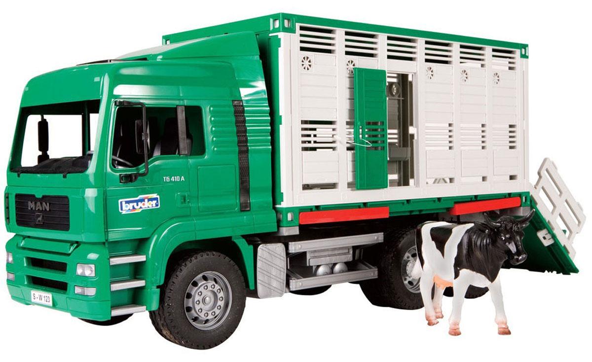 Bruder Фургон MAN для перевозки животных02-749Фургон Bruder MAN выполнен в точной копии с реальной моделью в масштабе 1:16. Фургон предназначен для перевозки крупного рогатого скота. Водительская кабина откидывается (открывается доступ к двигателю), зеркала складываются. Контейнер фургона можно отсоединить и использовать отдельно, установив на специальные опоры. Контейнер имеет две открывающиеся двери по бокам, а также открывающийся задний борт, который раскладывается в пандус для загона животных. Внутри контейнера есть перегородка. Крыша контейнера снимается. Прорезиненные колеса обеспечивают хорошее сцепление с любой поверхностью пола. В комплект также входит фигурка коровы.