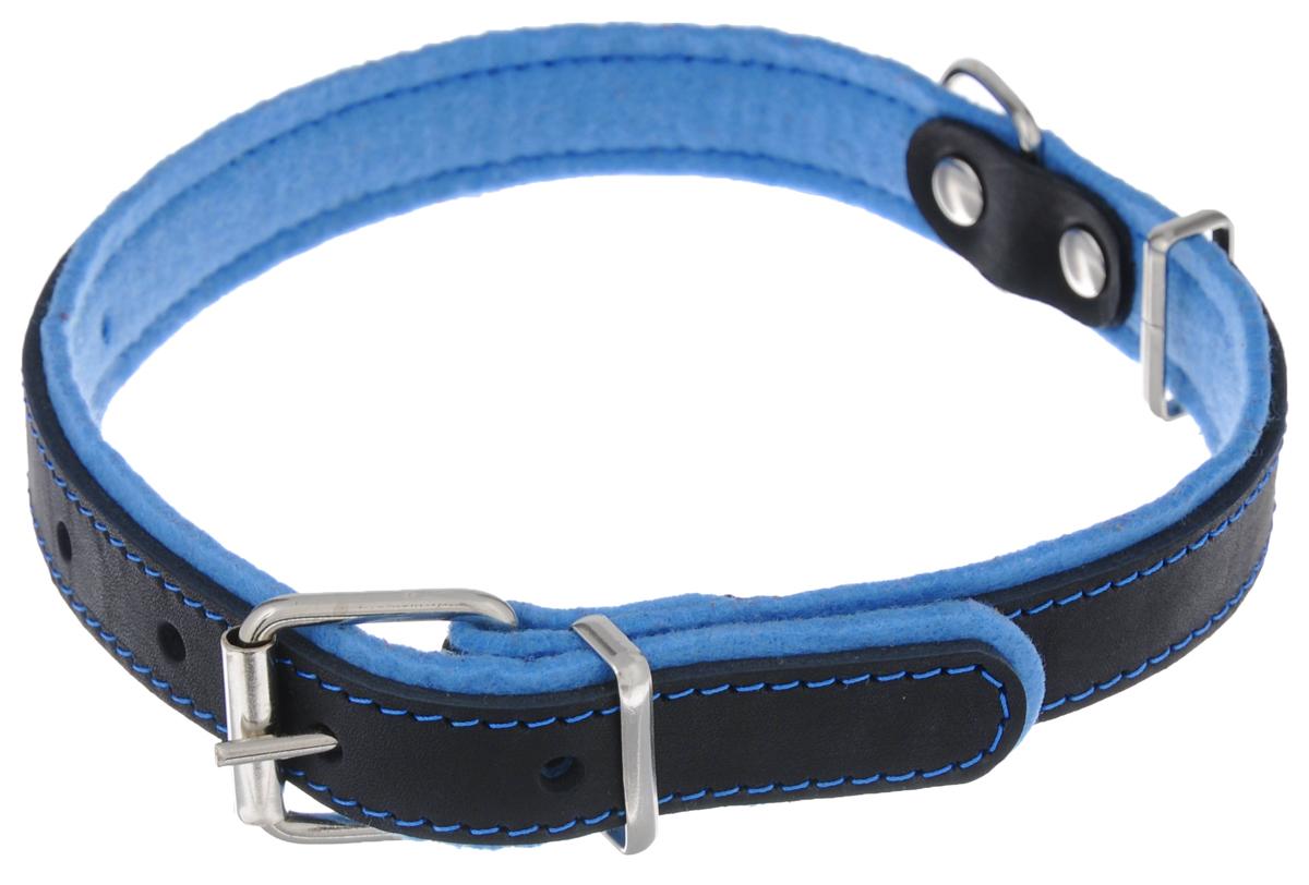 Ошейник для собак Аркон Фетр, цвет: черный, голубой, ширина 2,5 см, длина 57 смоф25гОшейник Аркон Фетр изготовлен из высококачественной натуральной кожи, устойчивой к влажности и перепадам температур, и фетра. Мягкий фетр предотвратит натирание шеи собаки ошейником и позволит ей с комфортом наслаждаться прогулкой. Размер ошейника регулируется с помощью металлической пряжки, которая фиксируется на одном из 6 отверстий изделия. Ошейник отличается высоким качеством, удобством и универсальностью. Минимальный обхват шеи: 35 см. Максимальный обхват шеи: 49 см. Ширина: 2,5 см.