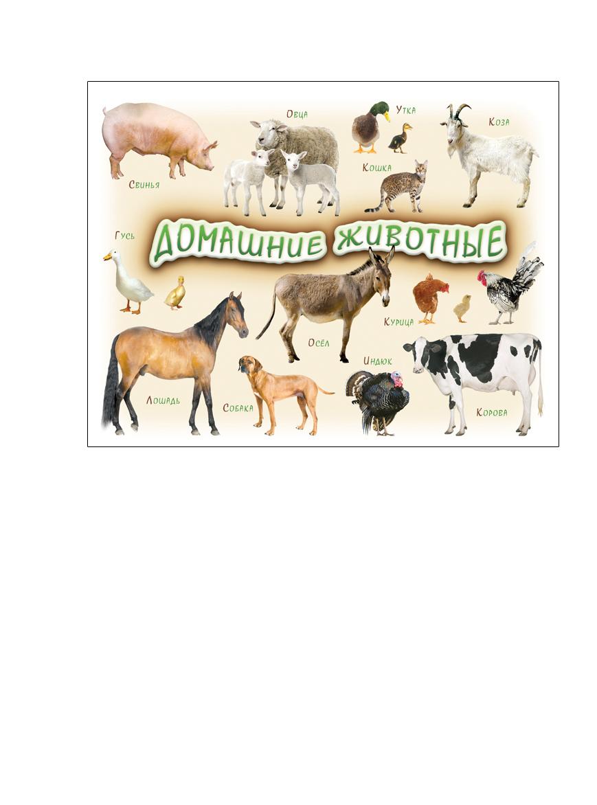 Шпаргалки для мамы Обучающая игра Домашние животные 1-4 года824Виниловый магнит на холодильник заметно облегчает процесс изучения знакомства с животными. Купите магнит на холодильник «Домашние животные 1-4 года», и Вы получите лист формата А4 с фотографиями животных для детей. Делаем удобным изучение животных!