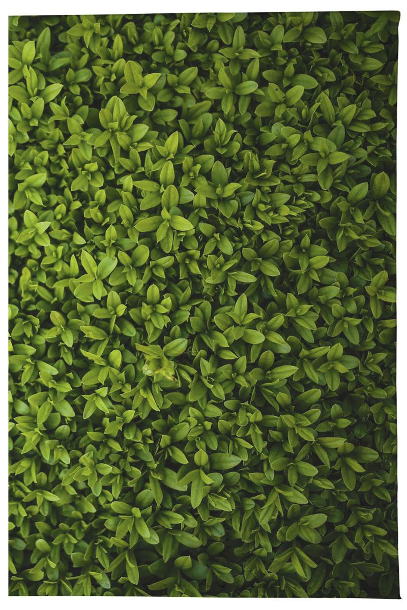 Визитница вертикальная Mitya Veselkov Травушка, цвет: зеленый. VIZAM302VIZAM302Вертикальная визитница Mitya Veselkov Травушка не только поможет сохранить внешний вид ваших документов и защитить их от повреждений, но и станет стильным аксессуаром, идеально подходящим вашему образу. Она выполнена из поливинилхлорида, внутри имеет два вертикальных кармашка из прозрачного пластика и съемный вкладыш, состоящий из 18 файлов для карточек. Такая визитница поможет вам подчеркнуть свою индивидуальность и неповторимость! Визитница стильного дизайна может быть достойным и оригинальным подарком.