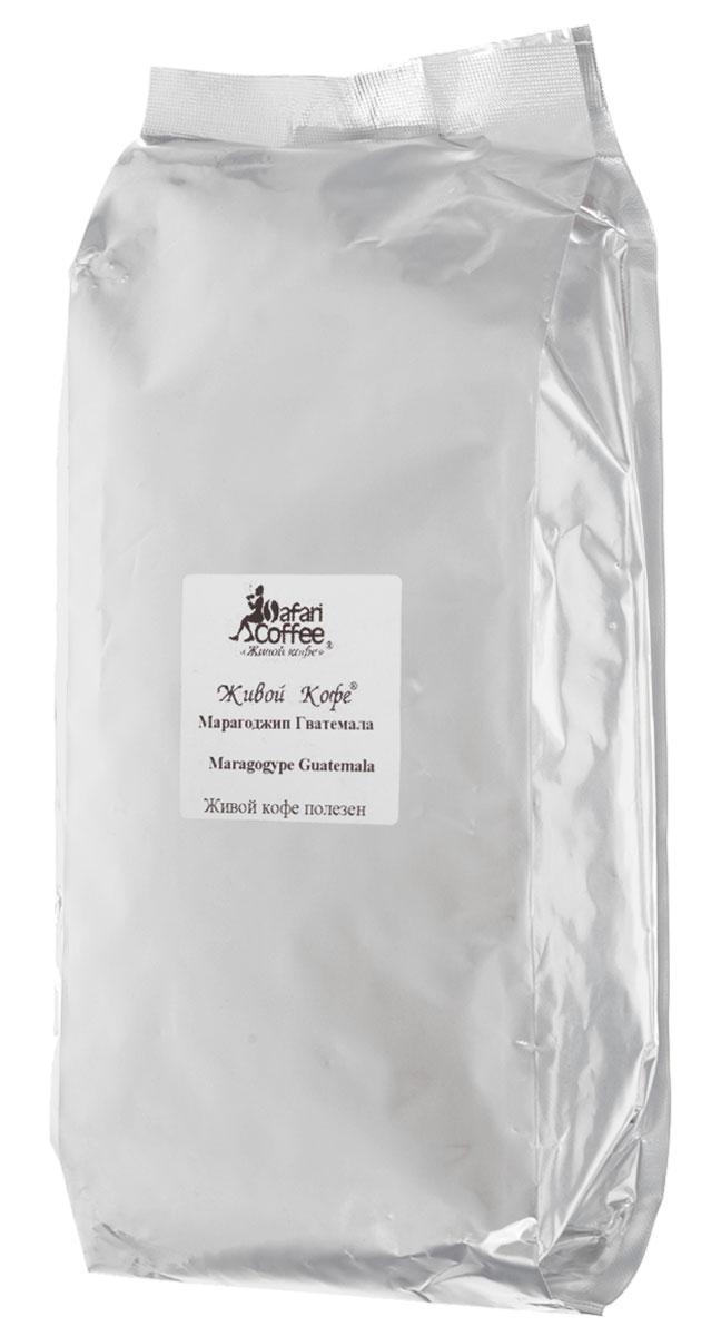 Живой кофе Марагоджип Гватемала кофе в зернах, 1 кг (промышленная упаковка)283Сорт Марагоджип – жемчужина кофе. Во-первых, это арабика небывало крупных размеров, во-вторых, напиток обладает достаточно легким вкусом и тонким ароматом, по сравнению с традиционными местными сортами. Марагоджип появился в результате переопыления нескольких видов кофе и скорее является их гибридом. Однако по своим вкусовым качествам он ничуть не уступает другим сортам, а многие его считают даже одним из лучших кофе в мире. Марагоджип Гватемала имеет насыщенный вкус с фруктовыми и цветочными нотками. Послевкусие долгое и мягкое.