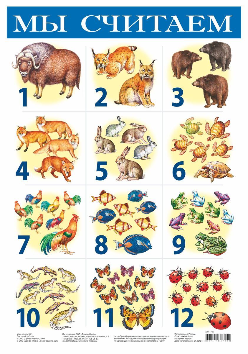 Дрофа-Медиа Обучающий плакат Мы считаем 11762Обучающий плакат Дрофа-Медиа Мы считаем 1 научит ребенка считать от 1 до 12. А также на плакате изображены некоторые виды животных.