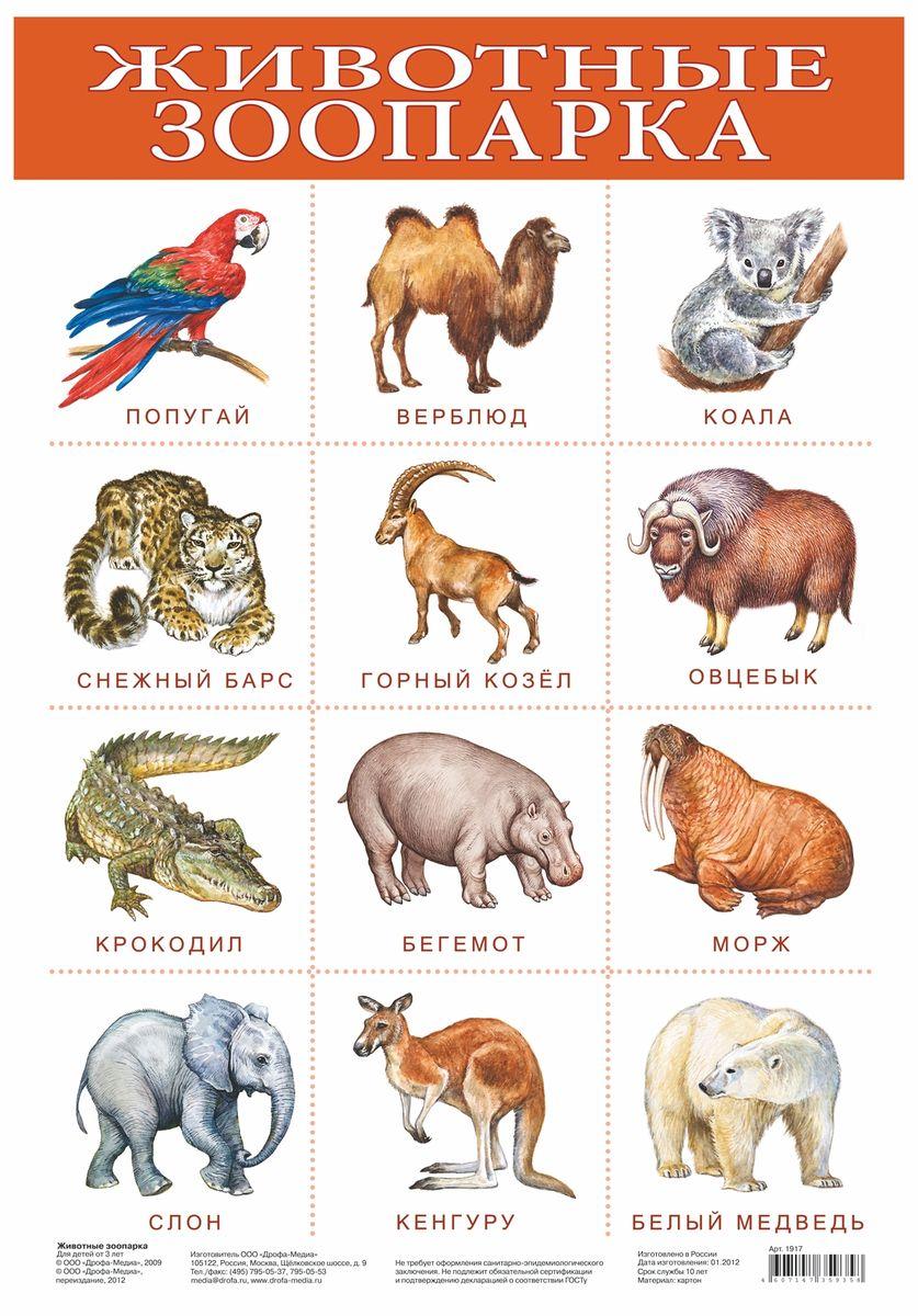 Дрофа-Медиа Обучающий плакат Животные зоопарка1917Обучающий плакат Дрофа-Медиа Животные зоопарка - это наглядное пособие для ознакомления и закрепления знаний по разным темам для вашего ребенка. На плакате изображены животные, которые обитают в зоопарке. У каждого животного есть свое название. Ярко-иллюстрированный плакат поможет вашему малышу запомнить не только как выглядят животные, но и как они называются. Такой плакат позволяет проводить обучение в игровой форме, делать его увлекательным и интересным.