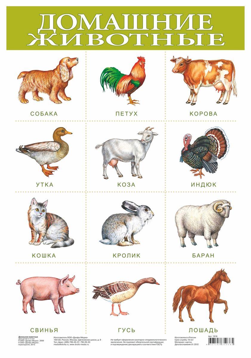 Дрофа-Медиа Обучающий плакат Домашние животные1918Обучающий плакат Дрофа-Медиа Домашние животные - интересное наглядное пособие, которое изображает все основные виды домашних животных, проживающих в частных домах. Под каждым изображением животного написано его название. Каждый вид изображен очень реалистично. Такое пособие поможет расширить кругозор ребенка, поможет ему на уроках биологии или зоологии.