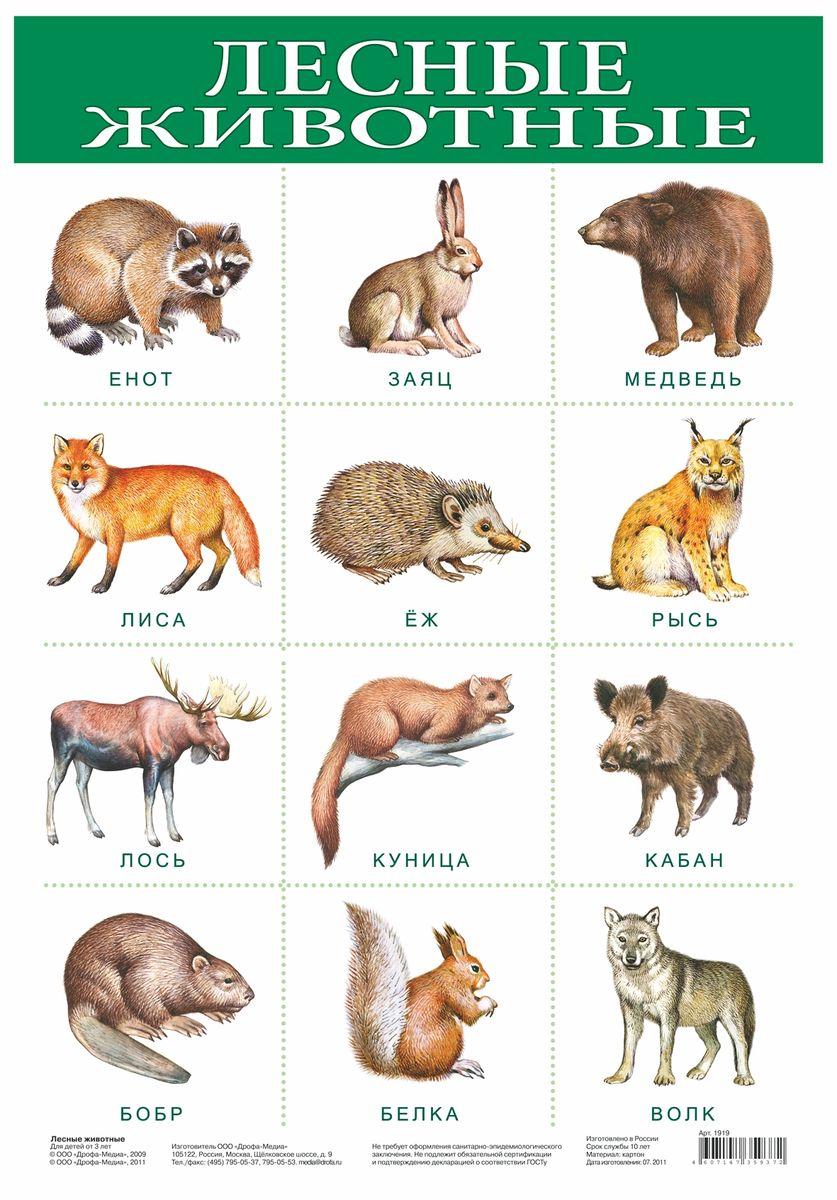 Дрофа-Медиа Обучающий плакат Лесные животные1919С помощью обучающего плаката Дрофа-Медиа ребенок узнает какие бывают животные, живущие в лесу, а также быстрее их запомнит. Называйте ребенку животных на картинке - так процесс обучения будет проходить в легкой игровой форме.
