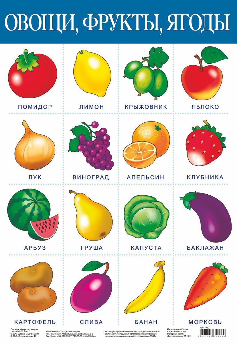 Дрофа-Медиа Обучающий плакат Овощи фрукты1920С помощью обучающего плаката Дрофа-Медиа Овощи фрукты ребенок узнает какие бывают овощи, фрукты, а также быстрее их запомнит. Называйте ребенку то, что изображено на картинке - так процесс обучения будет проходить в легкой игровой форме.