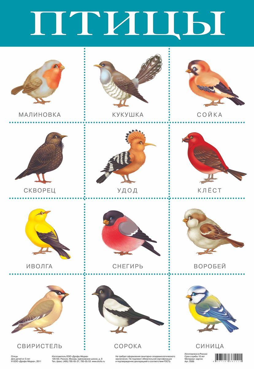 Дрофа-Медиа Обучающий плакат Птицы2088С помощью обучающего плаката Дрофа-Медиа Птицы ребенок познакомится с видами птиц, а также быстрее их запомнит. Называйте ребенку то, что изображено на картинке - так процесс обучения будет проходить в легкой игровой форме.