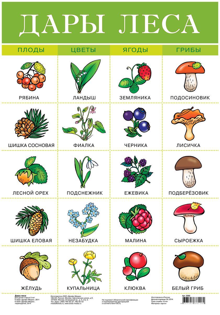 Дрофа-Медиа Обучающий плакат Дары леса2093Обучающий плакат Дрофа-Медиа Дары леса - это наглядное пособие для ознакомления и закрепления знаний по разным темам для вашего ребенка. На плакате изображены плоды, цветы, ягоды и грибы, которые растут в разных лесах. У каждого растения или цветка есть свое название. Ярко-иллюстрированный плакат поможет вашему малышу запомнить не только как выглядят растущие обитатели леса, но и как они называются. Такой плакат позволяет проводить обучение в игровой форме, делать его увлекательным и интересным.