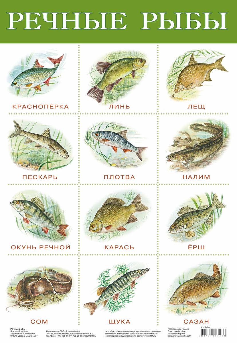 Дрофа-Медиа Обучающий плакат Речные рыбы2165С помощью обучающего плаката Дрофа-Медиа Речные рыбы ребенок узнает какие бывают виды рыб, а также быстрее их запомнит. Называйте ребенку то, что изображено на картинке - так процесс обучения будет проходить в легкой игровой форме.