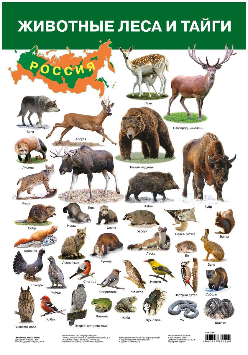 Дрофа-Медиа Обучающий плакат Животные леса и тайги2687Обучающий плакат Дрофа-Медиа Животные леса и тайги - это наглядное пособие для ознакомления и закрепления знаний по разным темам для вашего ребенка. На плакате изображены животные, которые живут в лесу и в тайге. У каждого животного есть свое название. Ярко- иллюстрированный плакат поможет вашему малышу запомнить не только как выглядят животные, но и как они называются. Такой плакат позволяет проводить обучение в игровой форме, делать его увлекательным и интересным.