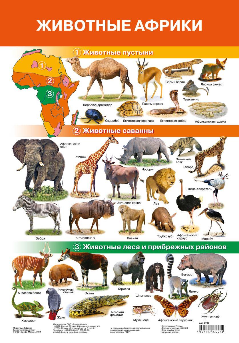 Дрофа-Медиа Обучающий плакат Животные Африки2705Обучающий плакат Дрофа-Медиа Животные зоопарка - это наглядное пособие для ознакомления и закрепления знаний по разным темам для вашего ребенка. На плакате изображены животные, которые обитают в пустыне, саванне, лесах и прибрежных районах Африки. У каждого животного есть свое название. Ярко-иллюстрированный плакат поможет вашему малышу запомнить не только как выглядят животные, но и как называются и где обитают. Такой плакат позволяет проводить обучение в игровой форме, делать его увлекательным и интересным.