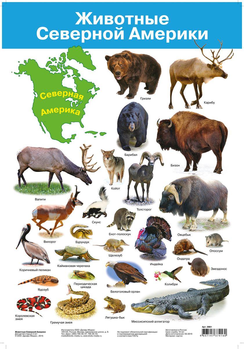 Дрофа-Медиа Обучающий плакат Животные Северной Америки2881Животный мир Северной Америки богат и разнообразен. Большинство видов типичны только для этого материка, но многие виды встречаются и в Евразии. На плакате Дрофа-Медиа представлены наиболее известные животные. Контур континента и его название хорошо запомнятся детям. Каждое животное подписано.