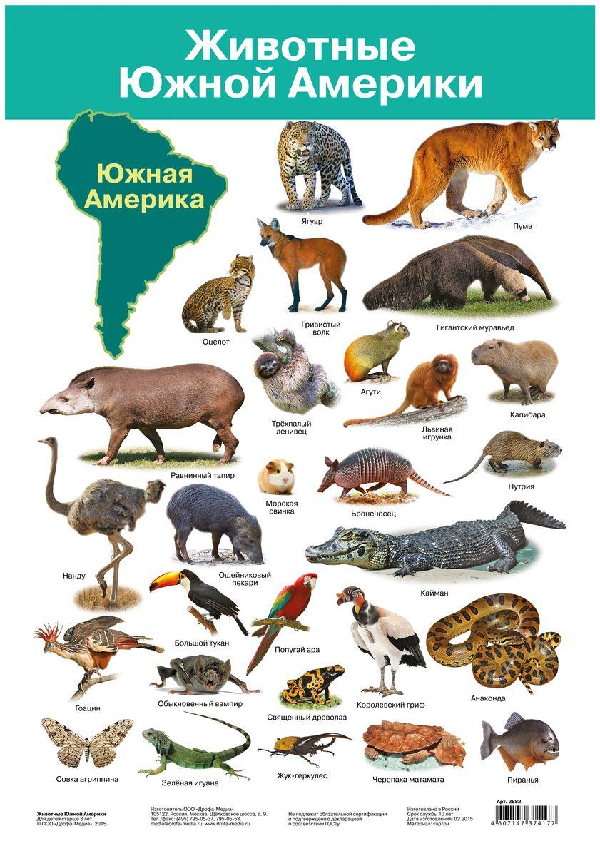 Дрофа-Медиа Обучающий плакат Животные Южной Америки2882Плакат Дрофа-Медиа познакомит детей с удивительным животным миром Южной Америки. Уникальные природные условия повлияли на разнообразие видов животных, многие из которых встречаются только здесь. Контур континента и его название хорошо запомнятся детям. Каждое животное подписано.