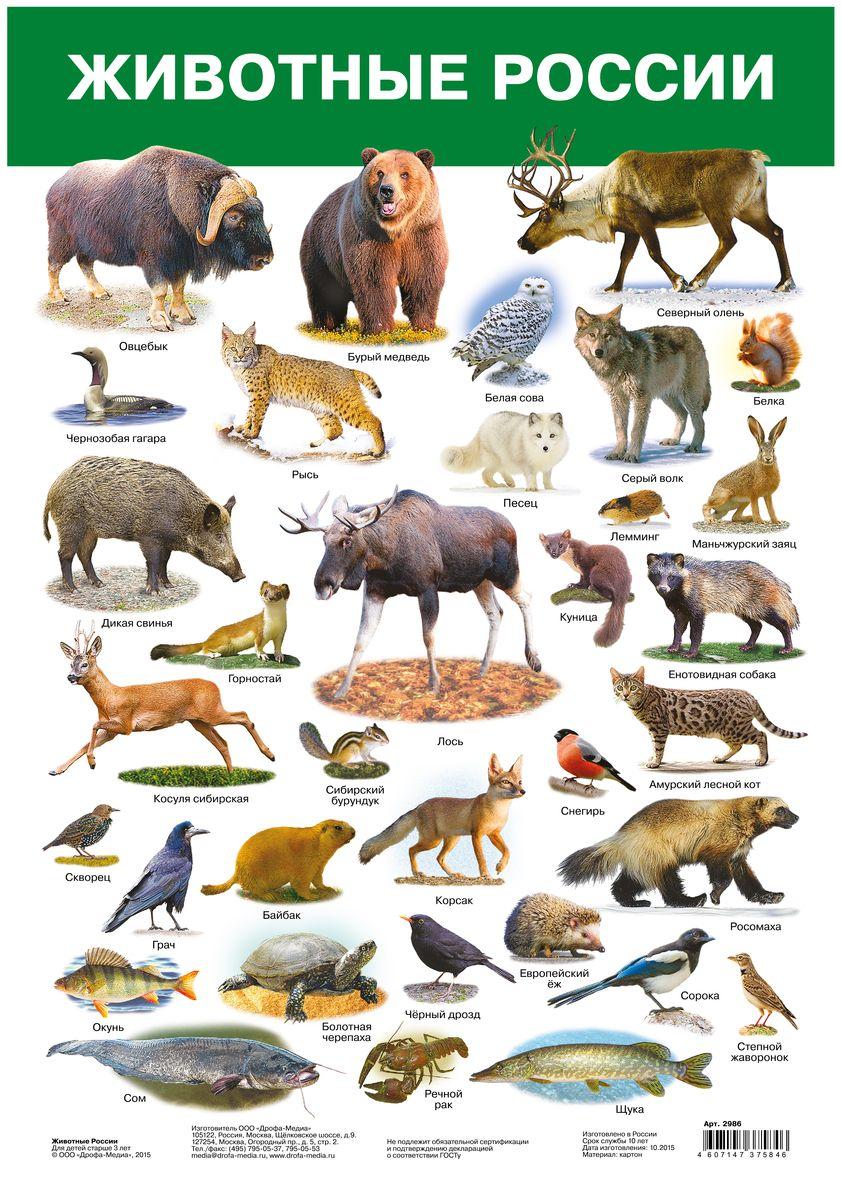 Дрофа-Медиа Обучающий плакат Животные России