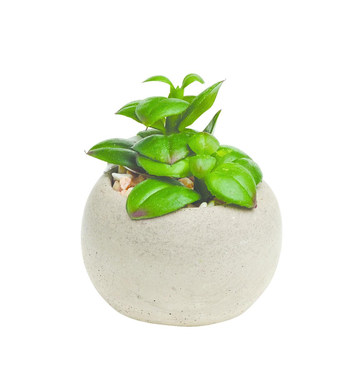 Растение суккулентное Gardman в круглом горшке, 8,5 х 6 см. 02860-202860-2
