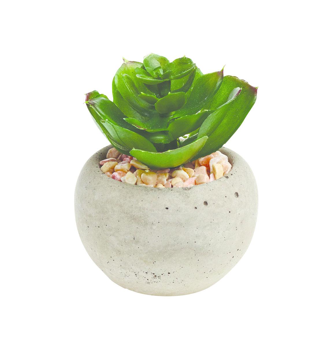 Растение суккулентное Gardman в круглом горшке, 8,5 х 6 см. 02860-502860-5
