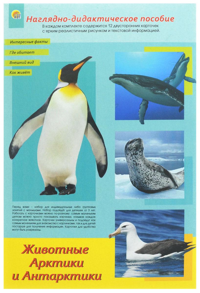 Рыжий Кот Обучающие карточки Дидактическое пособие Животные Арктики и АнтарктикиПД-1766Наглядно-дидактическое пособие Животные Арктики и Антарктики - это набор для индивидуальных или групповых занятий с малышами. Работать с карточками можно по-разному: самым маленьким деткам можно просто показывать картинки, называя каждое конкретное животное. Карточки универсальны и подойдут как самым маленьким для знакомства с картинками, так и для детей постарше для получения информации. Карточки для удобства могут быть разрезаны. Набор Животные Арктики и Антарктики содержит информацию о следующих животных: альбатрос, белая сова и розовая чайка, белый медведь, заяц-беляк и песец, морж, морской леопард, морской слон и овцебык, пингвин императорский, синий кит и горбатый кит, снежный буревестник, тюлень-крабоед и южный морской котик. В комплекте содержится 12 двусторонних карточек с ярким реалистичным рисунком и текстовой информацией.