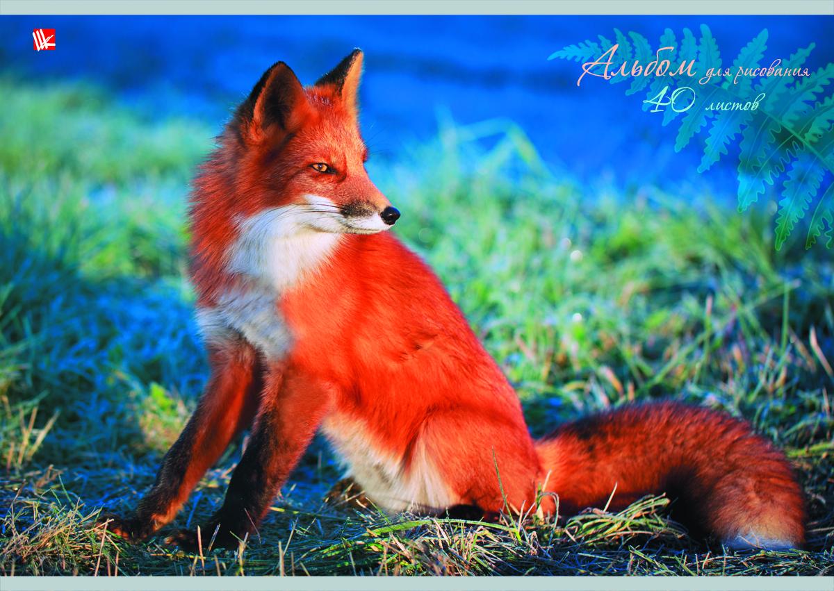 Канц-Эксмо Альбом для рисования Рыжая лисица 40 листовА401338Альбом для рисования Канц-Эксмо Рыжая лисица непременно порадует вашего малыша и вдохновит его на творчество. Яркая, красочная, креативная обложка привлечет внимание юного художника. Обложка альбома оформлена красочным мелованным картоном с выборочным лаком и с изображением рыжей лисички. Внутренний блок представлен 40 листами и изготовлен из высококачественной плотной бумаги, что гарантирует чистоту рисунков, высокое качество и комфорт при рисовании. Рисование поможет раскрыть таланты малыша, а также способствует развитию мелкой моторики и художественного вкуса. А с альбомом для рисования Канц-Эксмо Рыжая лисица рисовать легко и приятно! Рекомендуемый возраст: от 6 лет.