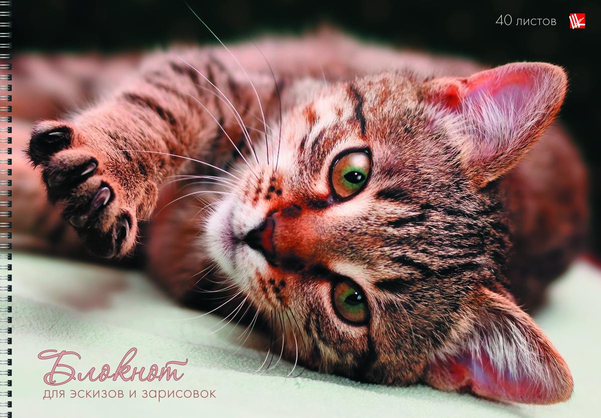 Канц-Эксмо Блокнот для эскизов Кошачья нежность 40 листов