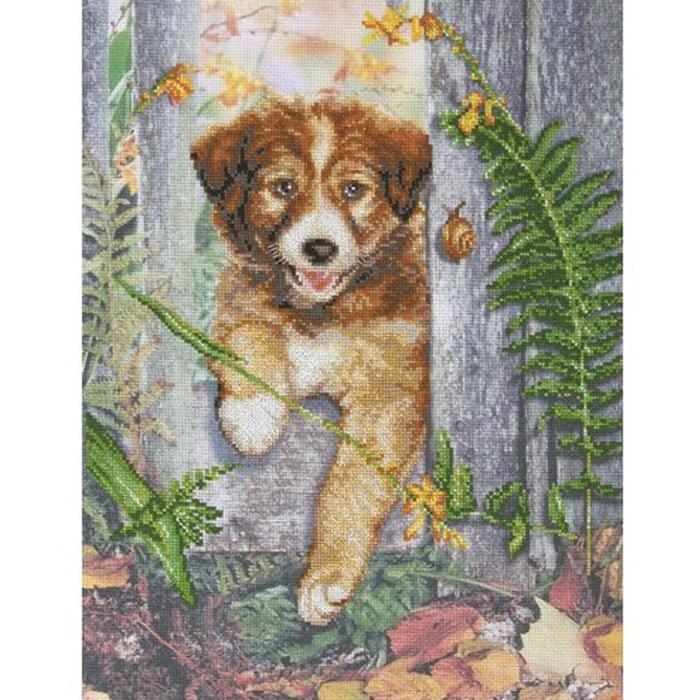 Набор для вышивания RTO Любопытный щенок, 29 см х 39 см. M70018M70018Мулине на карте, разобранное по цветам, канва с нанесенным рисунком, символьная схема, игла, инструкция