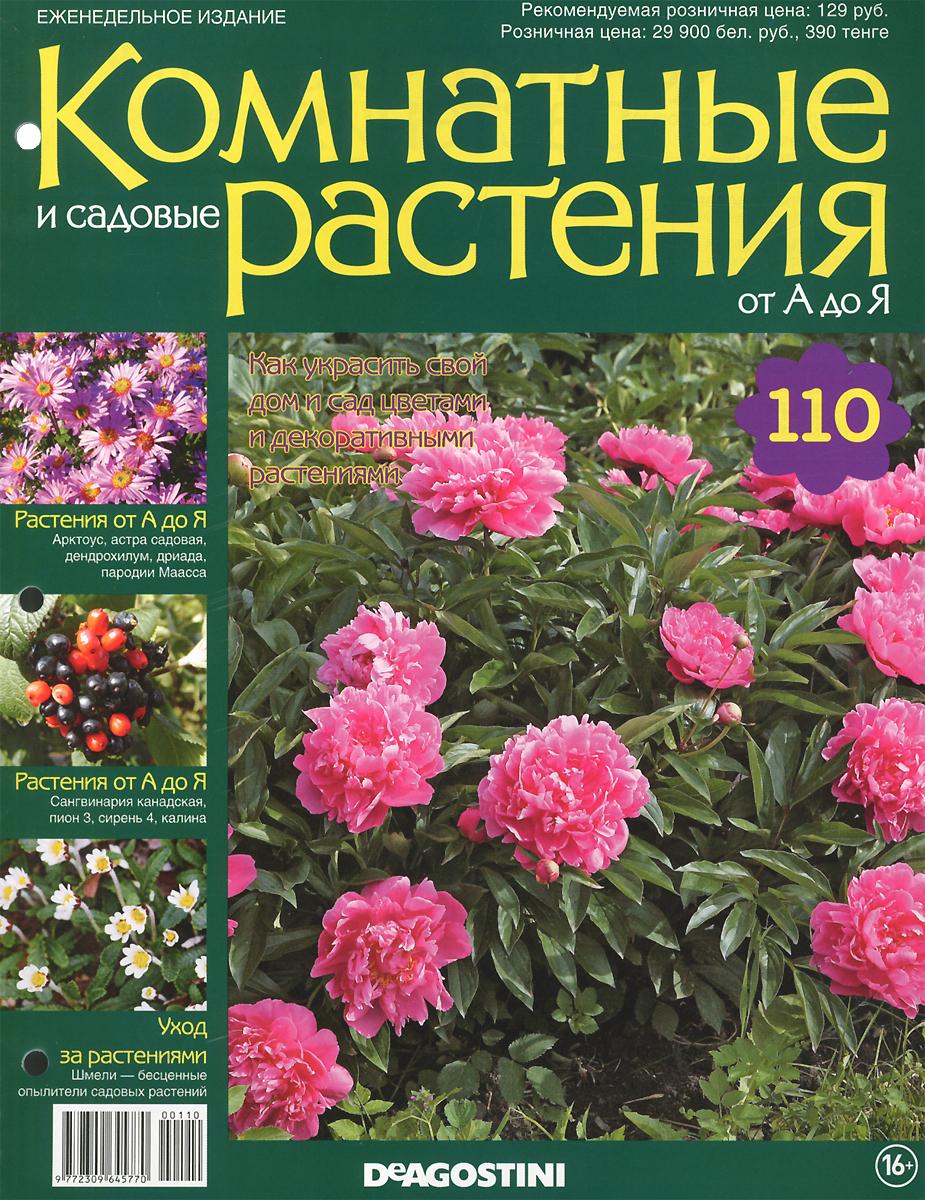 Садовые цветы и описание