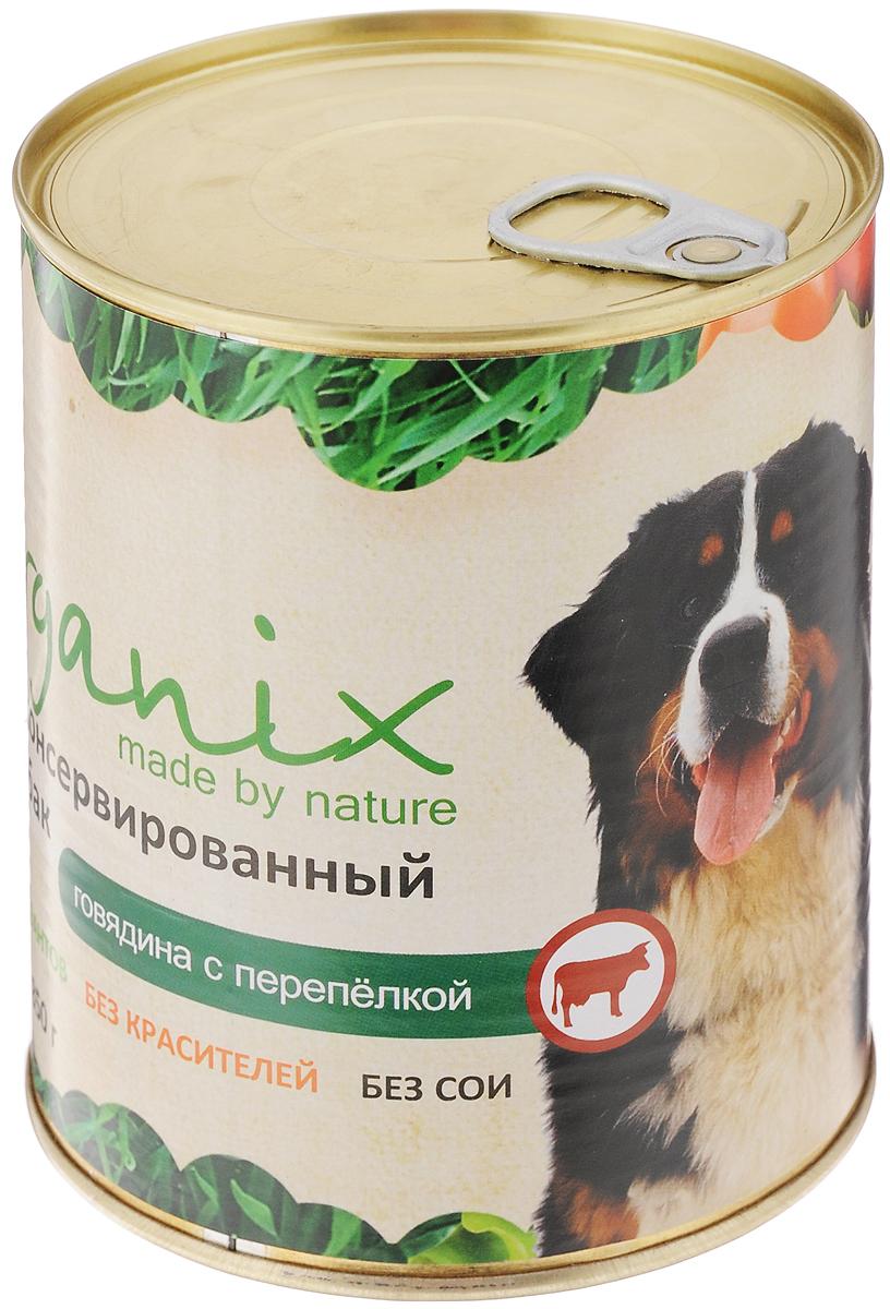 Консервы для собак Organix, говядина с перепелкой, 850 г19671Консервы для собак Organix - вкусный консервированный корм для собак с говядиной и перепелкой. Изготовлен из 100% свежего мяса различного вида. Не содержит искусственных красителей, ароматизаторов или консервантов, ГМО. Специальная обработка помогает сохранять корм длительное время. Корм приготовлен из тщательно отобранных сортов мяса, которые внесут приятное разнообразие в меню вашей собаки. Корм разработан для обеспечения всех питательных потребностей взрослых собак. Состав: говядина, рубец, мясо перепелок, масло растительное, мука костная, стабилизатор Е472с, соль, вода. Пищевая ценность (в 100 г продукта): белок - не менее 7,0 г, жир - не более 8,0 г. Энергетическая ценность (калорийность): 100 ккал/592 кДж. Товар сертифицирован.