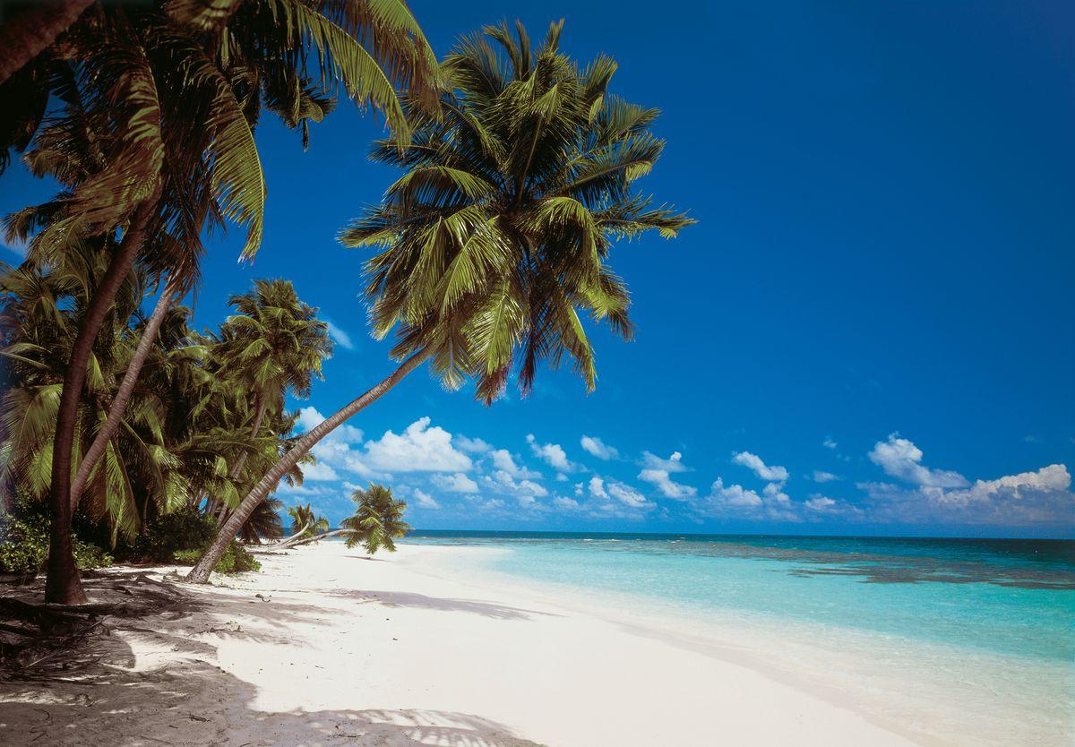 Фотообои Komar Мальдивы, 3,88 х 2,7 м8-240Бумажные фотообои известного бренда Komar позволят создать неповторимый облик помещения, в котором они размещены. Фотообои наносятся на стены тем же способом, что и обычные обои. Благодаря превосходной печати и высококачественной основе такие обои будут радовать вас долгое время. Фотообои снова вошли в нашу жизнь, став модным направлением декорирования интерьера. Выбрав правильную фактуру и сюжет изображения можно добиться невероятного эффекта живого присутствия. Ширина рулона: 3,88 м. Высота полотна: 2,7 м. Клей в комплекте.