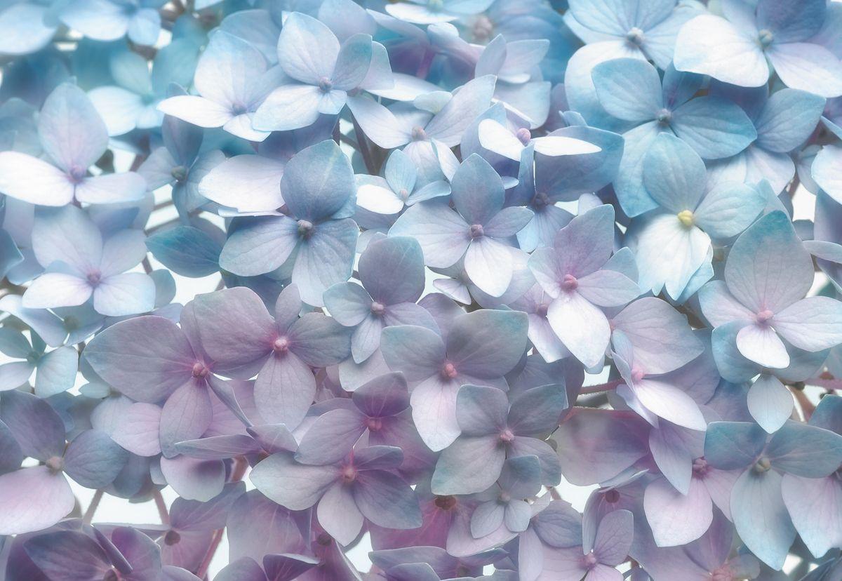 Фотообои Komar Светло-синий, 3,68 х 2,54 м8-961Бумажные фотообои известного бренда Komar позволят создать неповторимый облик помещения, в котором они размещены. Фотообои наносятся на стены тем же способом, что и обычные обои. Благодаря превосходной печати и высококачественной основе такие обои будут радовать вас долгое время. Фотообои снова вошли в нашу жизнь, став модным направлением декорирования интерьера. Выбрав правильную фактуру и сюжет изображения можно добиться невероятного эффекта живого присутствия. Ширина рулона: 3,68 м. Высота полотна: 2,54 м. Клей в комплекте.
