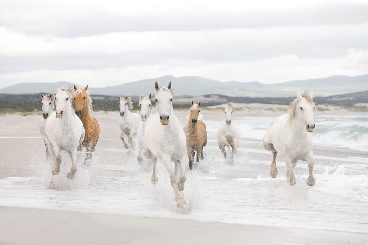 Фотообои Komar Белые лошади, 3,68 х 2,54 м8-986Бумажные фотообои известного бренда Komar позволят создать неповторимый облик помещения, в котором они размещены. Фотообои наносятся на стены тем же способом, что и обычные обои. Благодаря превосходной печати и высококачественной основе такие обои будут радовать вас долгое время. Фотообои снова вошли в нашу жизнь, став модным направлением декорирования интерьера. Выбрав правильную фактуру и сюжет изображения можно добиться невероятного эффекта живого присутствия. Ширина рулона: 3,68 м. Высота полотна: 2,54 м. Клей в комплекте.