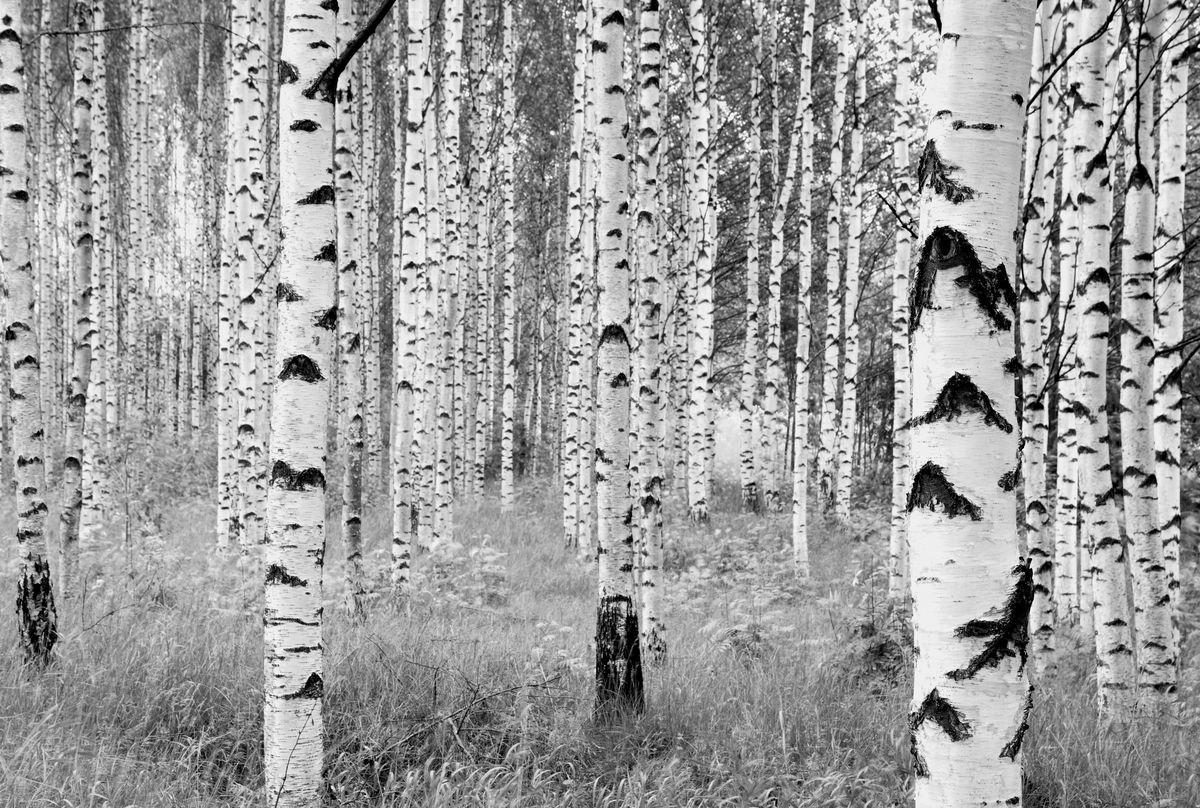 Фотообои Komar Деревья, 3,68 х 2,48 мXXL4-023Флизелиновые фотообои известного бренда Komar позволят создать неповторимый облик помещения, в котором они размещены. Фотообои наносятся на стены тем же способом, что и обычные обои. Благодаря превосходной печати и высококачественной флизелиновой основе такие обои будут радовать вас долгое время. Фотообои снова вошли в нашу жизнь, став модным направлением декорирования интерьера. Выбрав правильную фактуру и сюжет изображения можно добиться невероятного эффекта живого присутствия. Ширина рулона: 3,68 м. Высота полотна: 2,48 м.