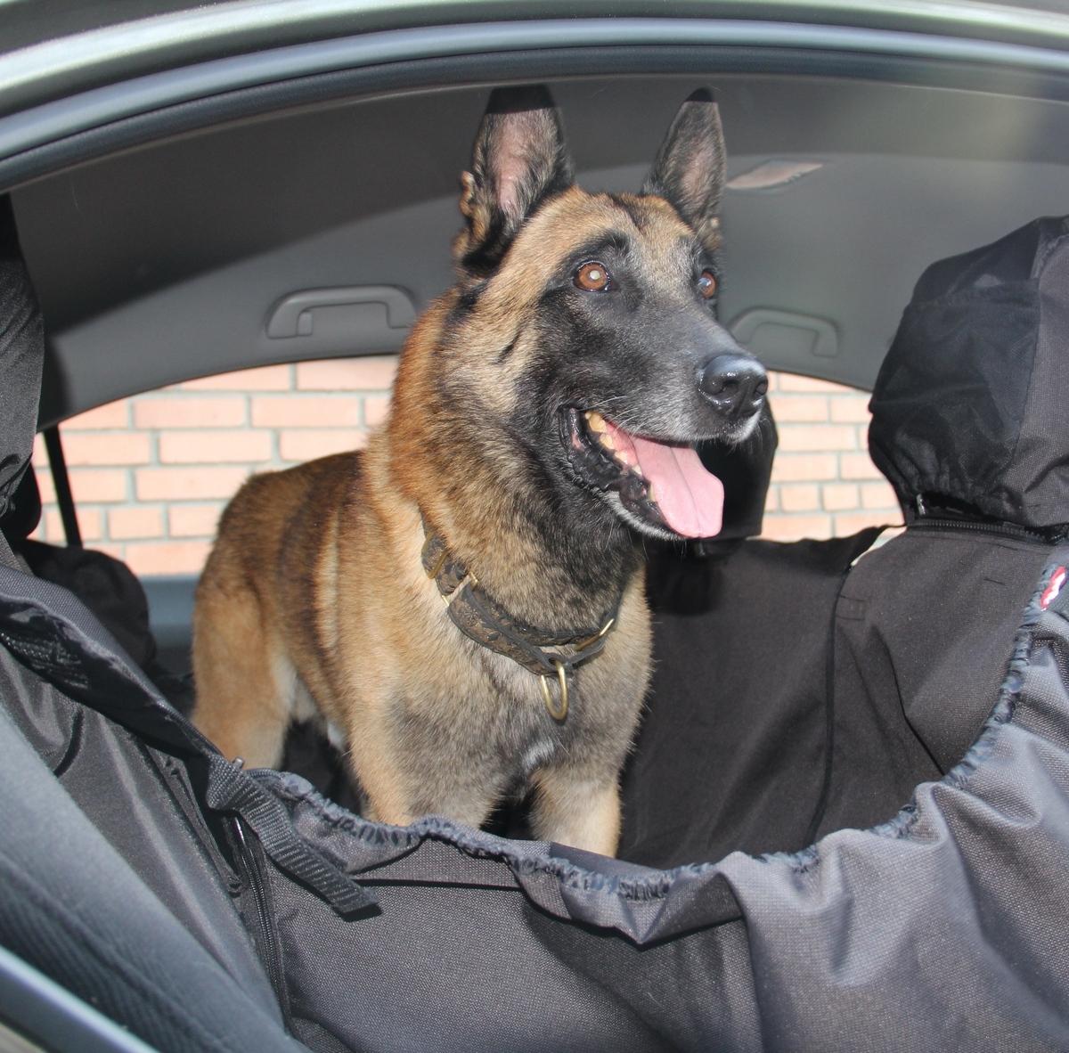 Автогамак для собак OSSO Fashion Car Premium, с защитой обивки дверей, цвет: серыйГ-1005Автогамак OSSO Fashion Car Premium с защитой обивки дверей – это 3 автогамака в одном: – вы можете его использовать на полное сидение, на 1/3 сидения, на 2/3 сидения и в багажнике, достаточно только перестегнуть боковые части гамака. Автогамак OSSO Fashion Car Premium с защитой обивки задних дверей имеет ряд преимуществ: – легко монтируется между передними и задними сиденьями любой марки автомобиля, его можно устанавливать в багажном отделении салона (автомобилей с кузовом «универсал» или внедорожников) – конструкция автогамака OSSO Fashion Car Premium с защитой обивки задних дверей предохраняет от загрязнений сидения, обивку салона и обивку дверей – идеально подходит для собак всех пород, не вызывает раздражения у животных – конструкция гамака надежно защищает питомца во время поездок (движения/торможения) – собака уже не соскользнет с заднего сидения даже при резком торможении – а также ограничивает её передвижение по салону. Автогамак...
