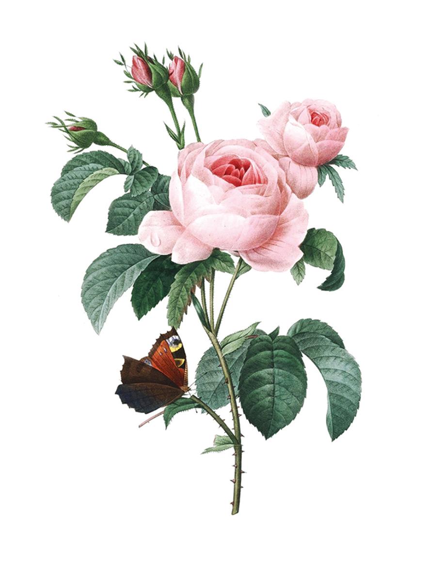 Принт для вышивания Zengana Роза с бабочкой, 12 х 15 см278-ZENGANAПринт на ткани (габардин высокого качества) предназначен для объемной вышивки (лентами, гладью, бисером). Картина напечатана на профессиональном оборудовании, не выгорает, при стирке не линяет.