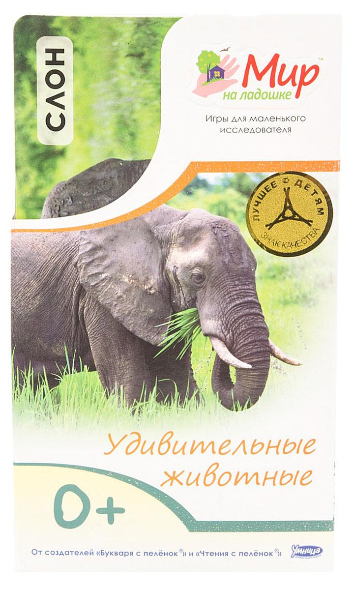 Умница Обучающие карточки Удивительные животные Слон4620755680348Почему зебра полосатая? Кто такой черно-белый котоног? Когда жирафу мешает шея? Маленькому исследователю интересно все! Комплект Умница Удивительные животные. Слон познакомит малыша с самыми красивыми и необычными животными нашей планеты. Изучать животных так увлекательно! Можно попрыгать, как кенгуру, порычать, как лев, и пошалить, как обезьянка! Карточки с яркими фотографиями удобно умещаются в детской ладошке. С ними можно играть в любом месте и в любое время. На обороте карточек собраны самые удивительные факты об окружающем мире. В комплект также входит карточка для родителей с методическими рекомендациями и правилами игры. В игре малыш учится наблюдать, анализировать, описывать и классифицировать объекты живой и неживой природы. Интересные творческие задания помогают развивать воображение, образное мышление и моторику.