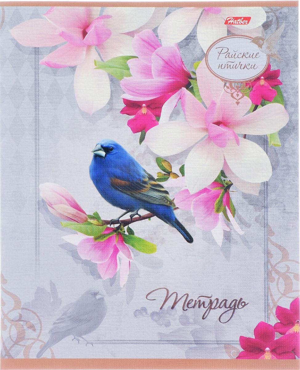 Hatber Тетрадь Райские птички 48 листов в клетку 14816