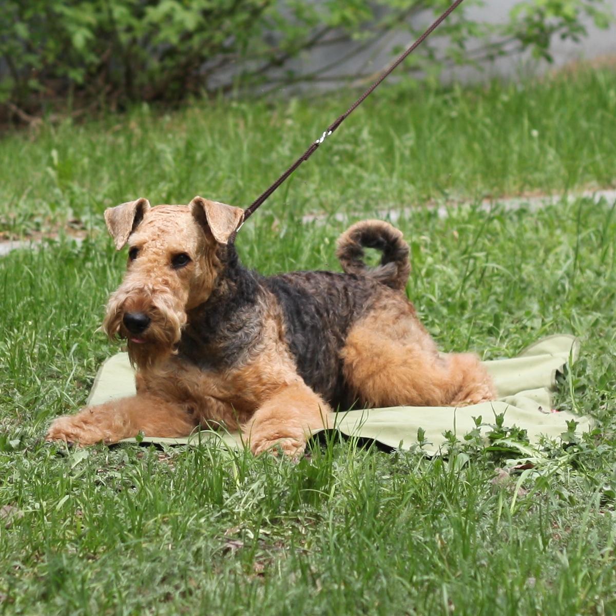 Коврик для собак Osso Fashion, охлаждающий, цвет: оливковый, 75 х 100 смО-1017Охлаждающий коврик Osso Fashion из ткани ССТ (COOL COMFORT TECHNOLOGY) помогает собакам легче переносить жару, делает более комфортным их пребывание в душной квартире, в транспорте и на выставках. Охлаждающий коврик можно постелить на пол или на лежанку, где собаке будет комфортно проводить время жарким летним днем. Также его можно использовать как покрывало, которое защитит от жары и вас, и вашего питомца. Охлаждающее изделие Osso Fashion сшиты из инновационной ткани ССТ (COOL COMFORT TECHNOLOGY), которая создает персональную зону охлаждения и обеспечивает комфортную терморегуляцию на длительное время. Охлаждение ткани обеспечивается за счет уникальной структуры переплетения волокон, создающих капиллярные сети повышенной плотности. Серебросодержащее волокно X-Static, входящее в состав ткани, придает ей антистатические и антимикробные свойства. Длительное использование и многократные стирки не влияют на охлаждающие свойства ткани. В отличие от охлаждающих тканей предыдущего...