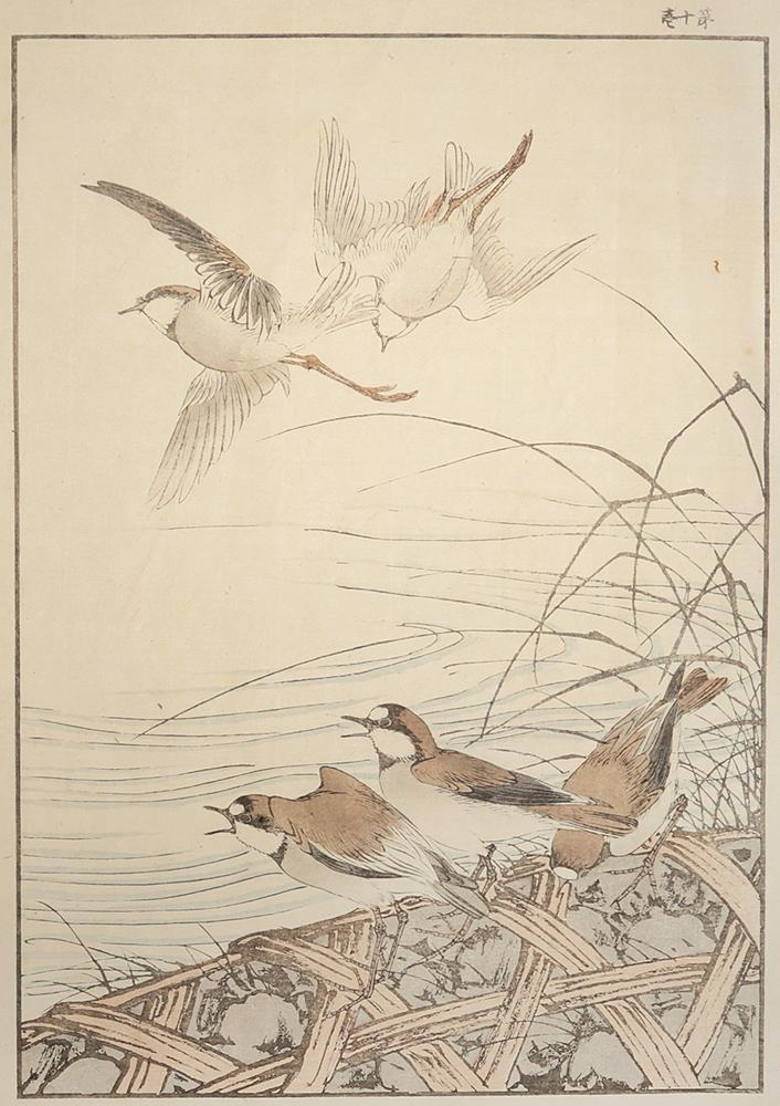Птицы. Литография (Япония, начало XX века)